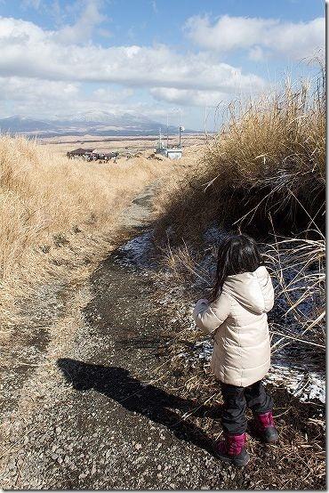 冬の阿蘇大観峰 側道