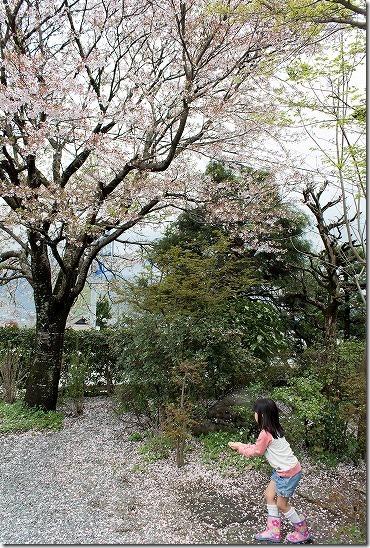 南阿蘇 久木野庵の桜