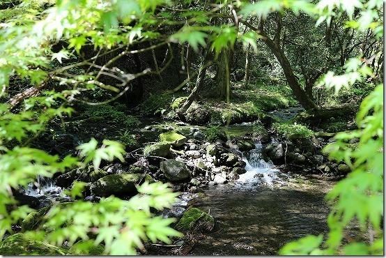 山吹水源の新緑