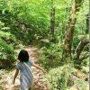 三段峡の新緑と三段滝(出雲・境港の周遊旅行)