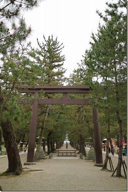 出雲大社の松の参道