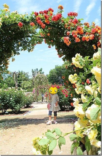 福岡市動植物園のバラ園のアーチ