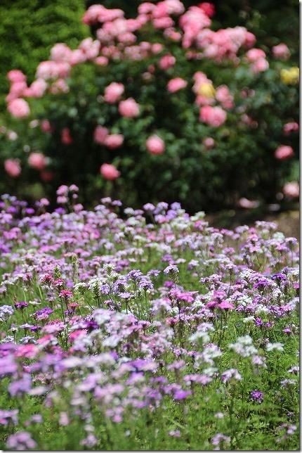 福岡市動植物園の花園