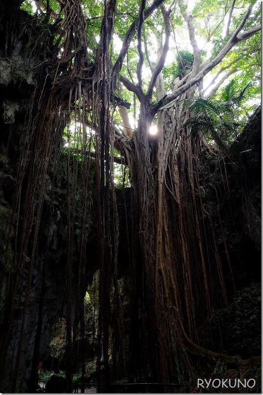 沖縄旅行(2日目) ガンガラーの谷 ツアーの見どころ