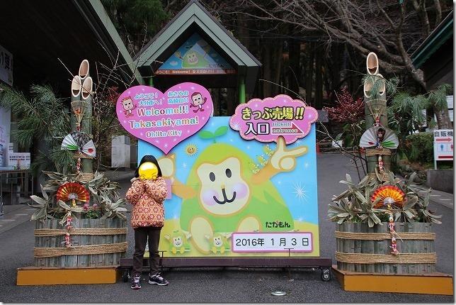 申年 早朝の高崎山のお猿さんに会いに(別府)