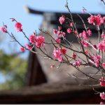 恋木神社・水田天満宮を春の梅の季節に参拝(福岡県筑後市)