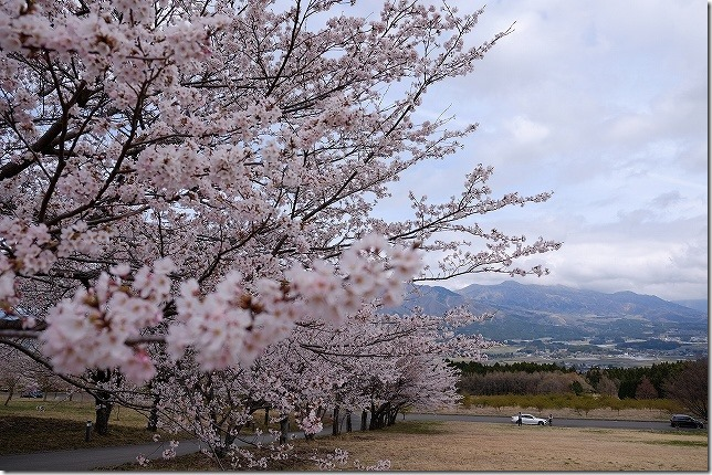 阿蘇とアスペクタの桜並木