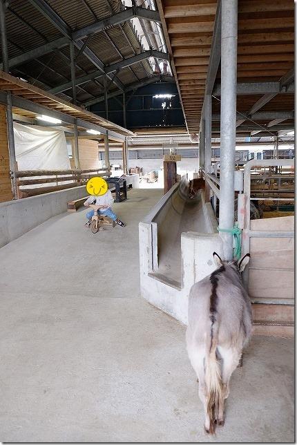 ふれあい動物園 フェアリーテールのひよこ ロバと子供