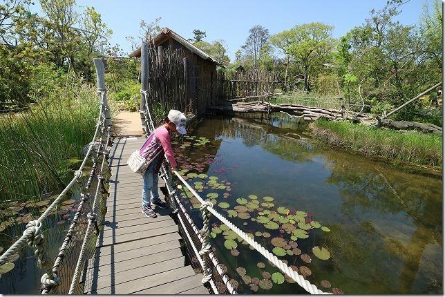 ときわ動物園の吊橋