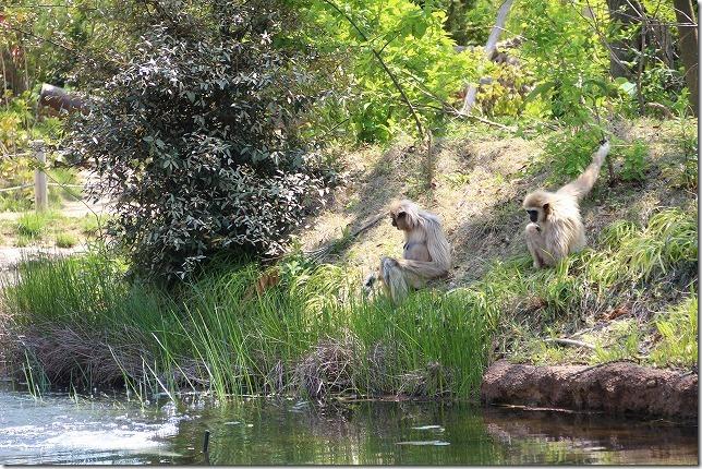 ときわ動物園、水辺の猿