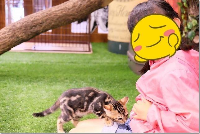 子供と子猫、湯布院