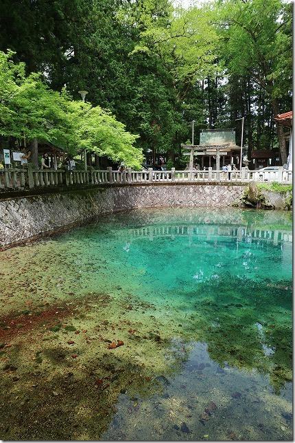 別府弁天池の青い水