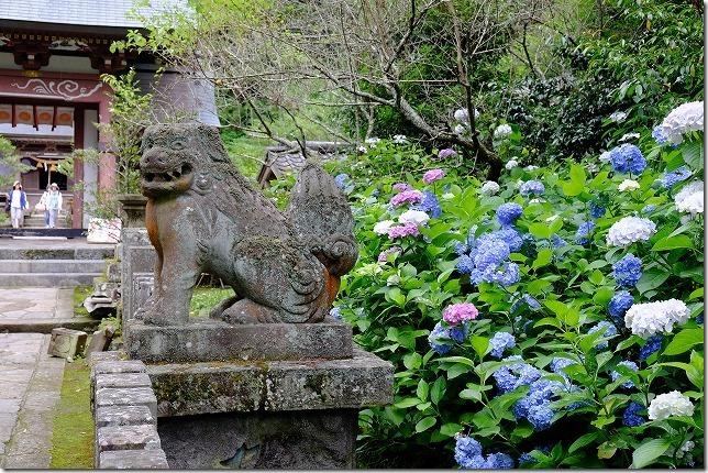 宇奈岐日女神社(うなぎひめ神社)のあじさい