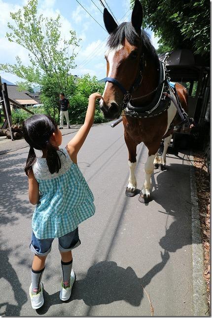 子供も触れた馬車の馬、湯布院