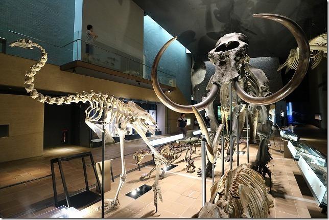 いのちのたび博物館、常設展の恐竜