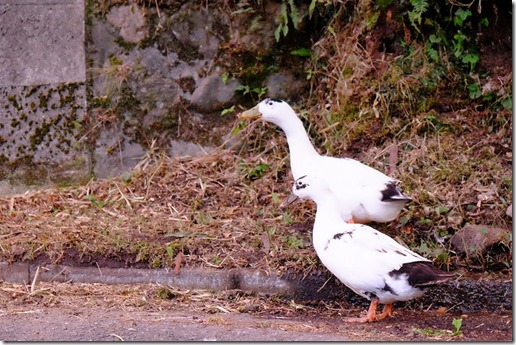 宇戸の庄の鳥