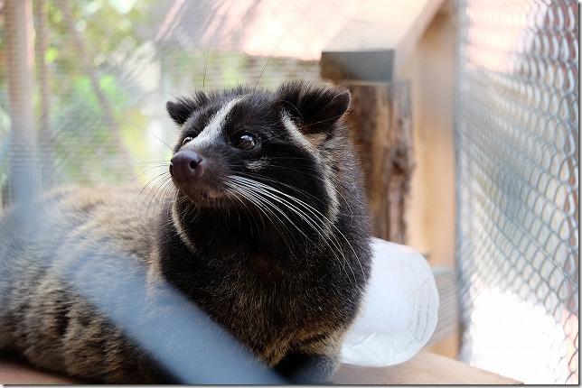 大牟田動物園の夏の動物たち(入園料、場所)