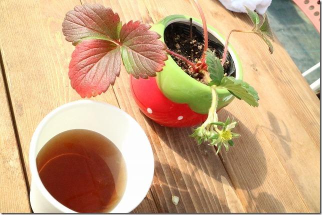 よかもんイチゴでお茶