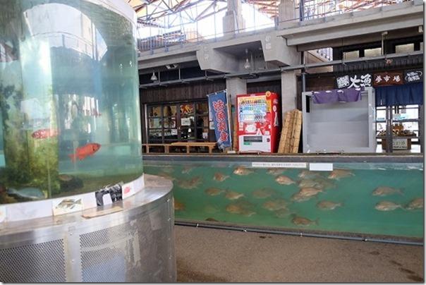 道の駅、うしぶか海彩館の魚