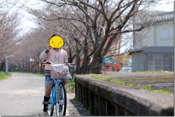 旧国鉄、南佐賀駅跡の桜