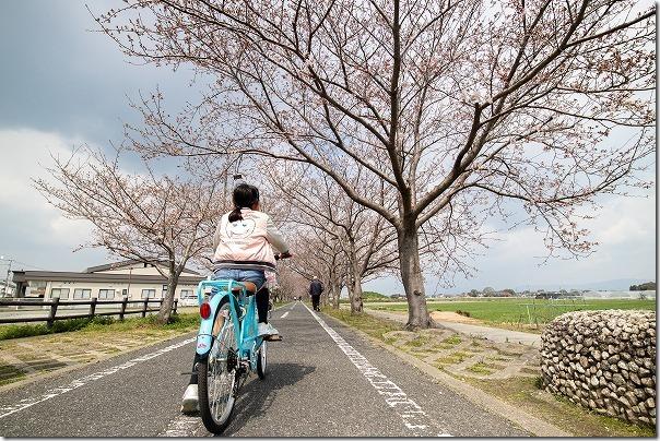 徐福サイクリングロードの桜並木、子供と