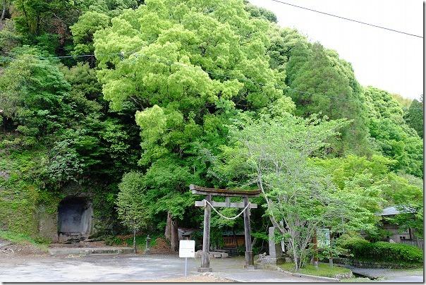 清水の湧水の神社、巨木
