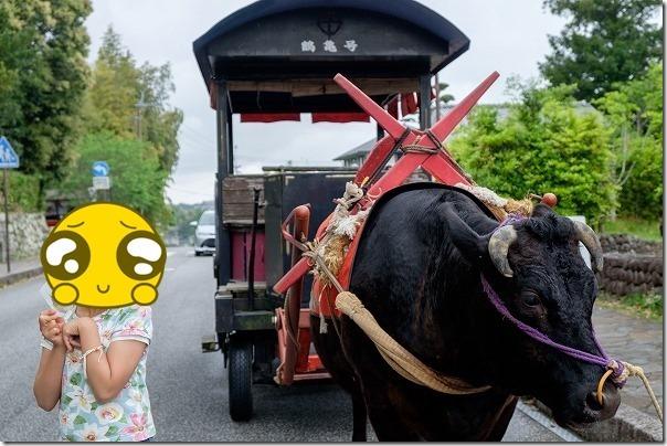 出水、観光牛車と記念撮影