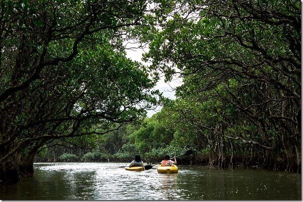 奄美大島、マングローブ原生林をカヌー体験