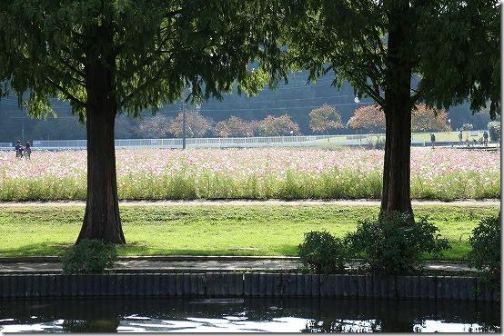 あけぼの山農業公園のコスモス畑