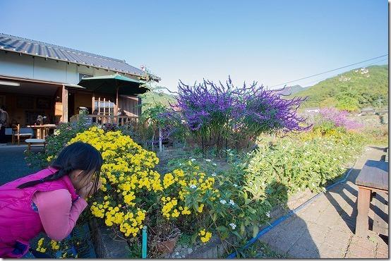 秋月のカフェ Soo-Saiの庭