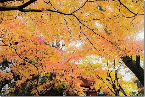 本土寺の紅葉 山門の紅葉