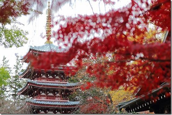 本土寺の紅葉 五重塔