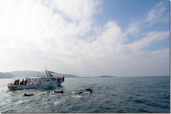 天草 イルカウオッチング イルカの群れ