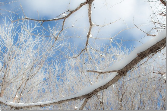 牧ノ戸峠の樹氷