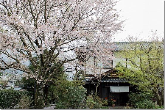 桜と久木野庵 南阿蘇