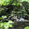 新緑のくじゅうツーリング 山吹水源と扇棚田