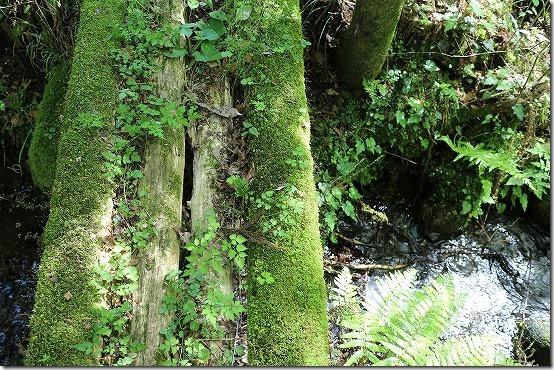 山吹水源 散策 丸太橋