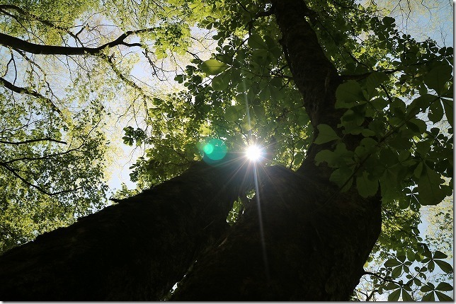 三段峡の新緑の木々
