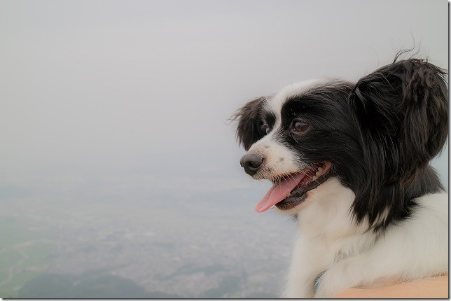 米山展望台から眺めるパピヨン