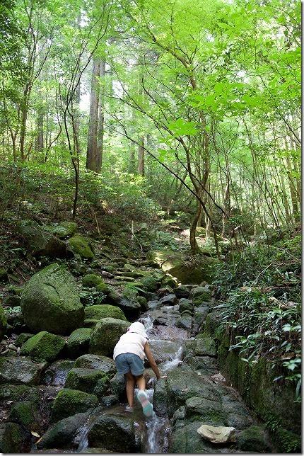 油山市民の森で川遊び