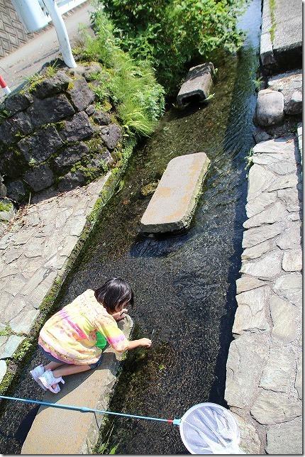 塩井社水源の湧水