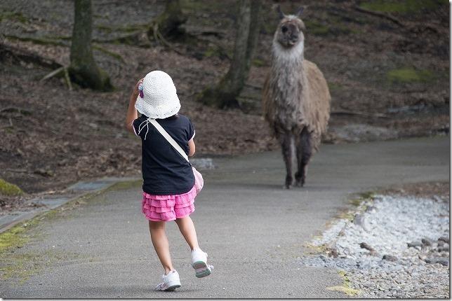 くじゅう自然動物園 と ピザランチ