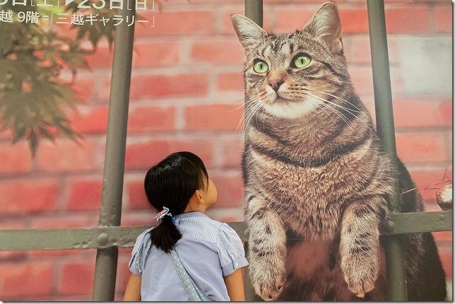 世界ネコ歩き展の世界へ入ってみる