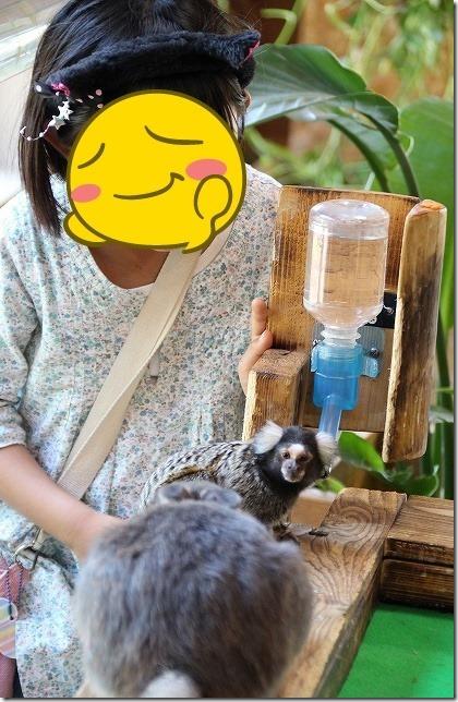 長崎バイオパークで犬・猫・小動物とふれあう新施設PAW