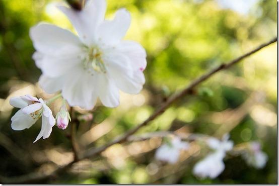 秋の鎌倉散策 北鎌倉 東慶寺のお花