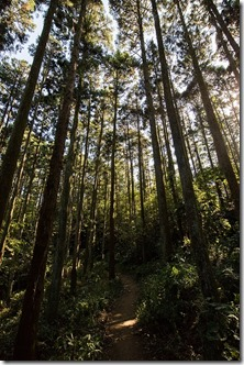 秋の鎌倉散策 天園ハイキングコース終点、瑞泉寺へ