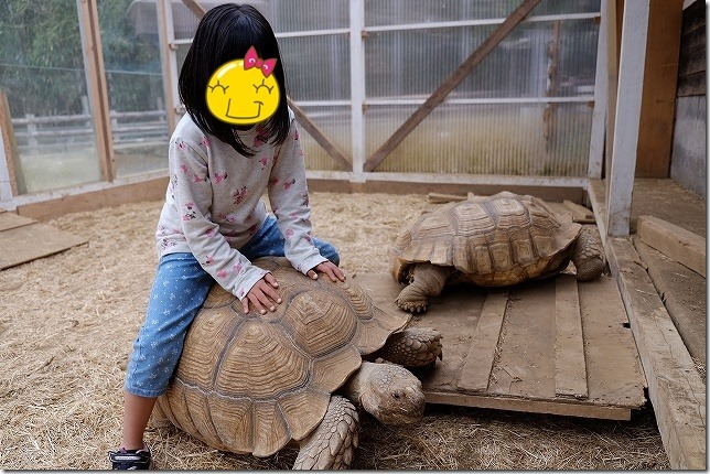 ふれあい動物園