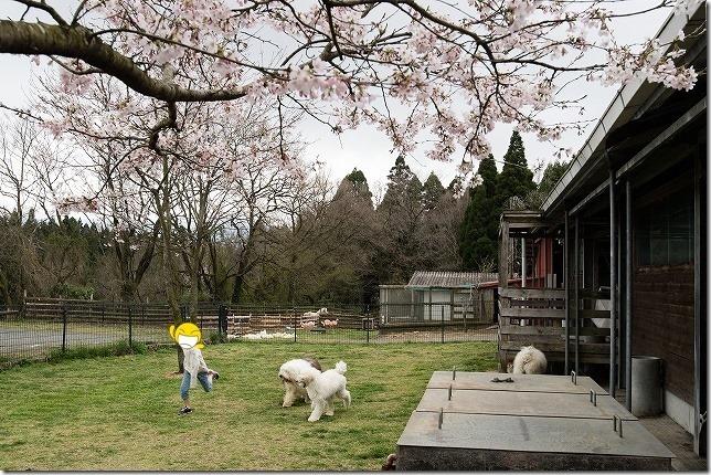 ふれあい動物園 フェアリーテールの犬