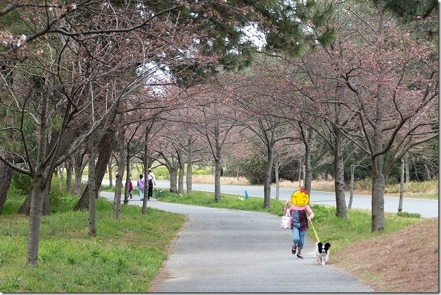 海の中道海浜公園の桜並木