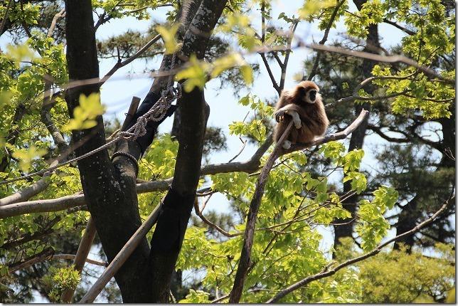 ときわ動物園、木の上の猿
